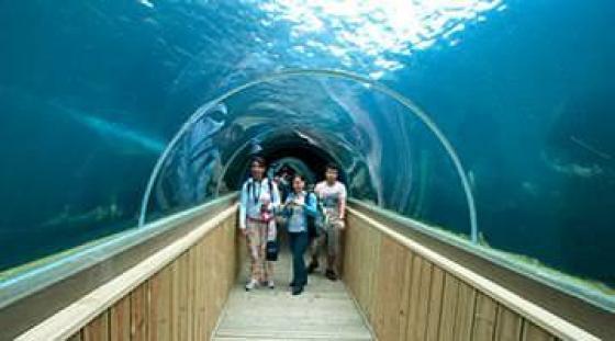 Zwiedzanie National Marine Aquarium w Plymouth podczas kursów angielskiego